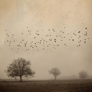 Mirando al Cielo 4 by Rosa Basurto