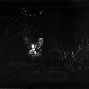 Cat in the Bush