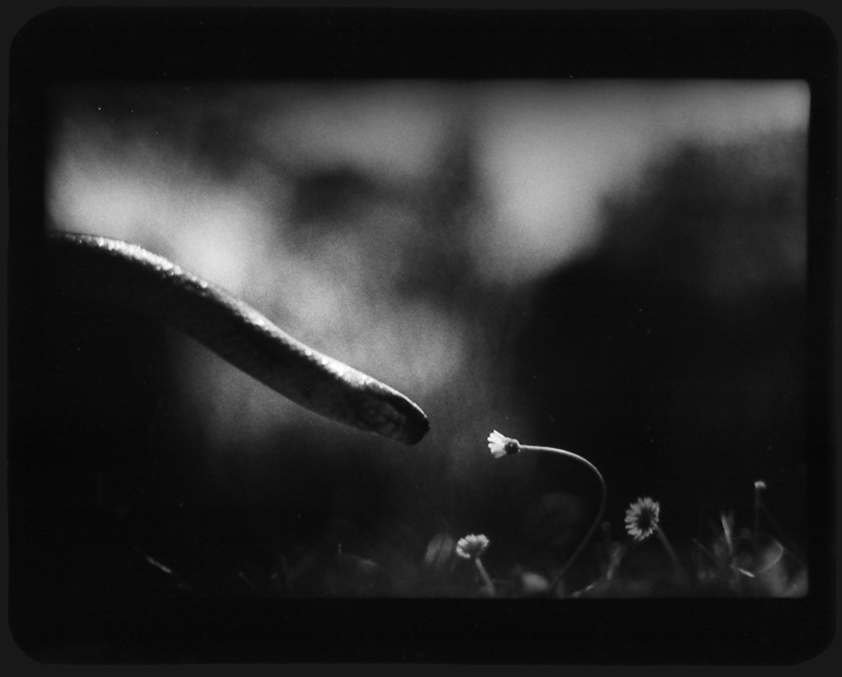 Snake and Flower
