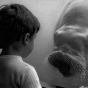 Child & Walrus