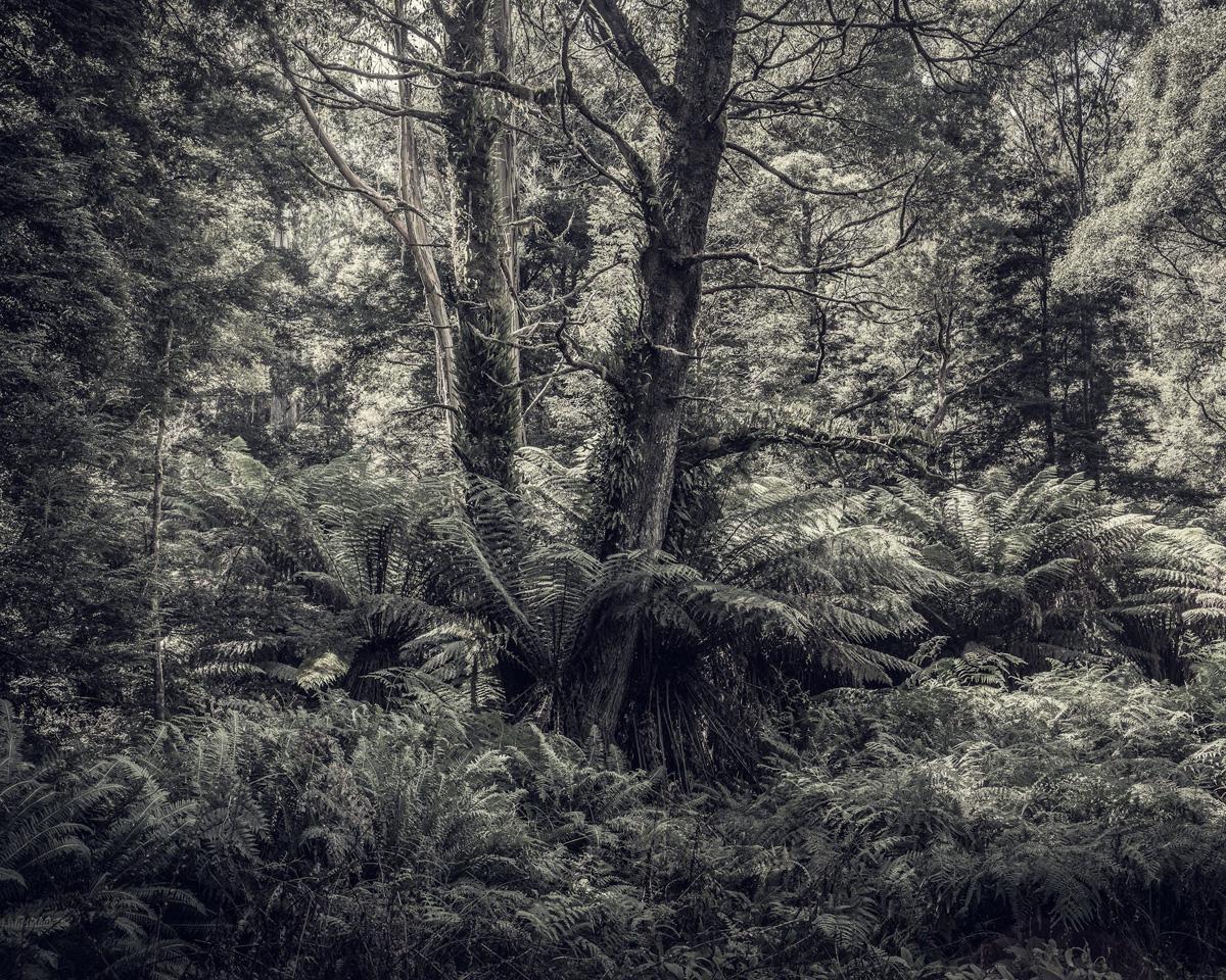 Fern Forest 1