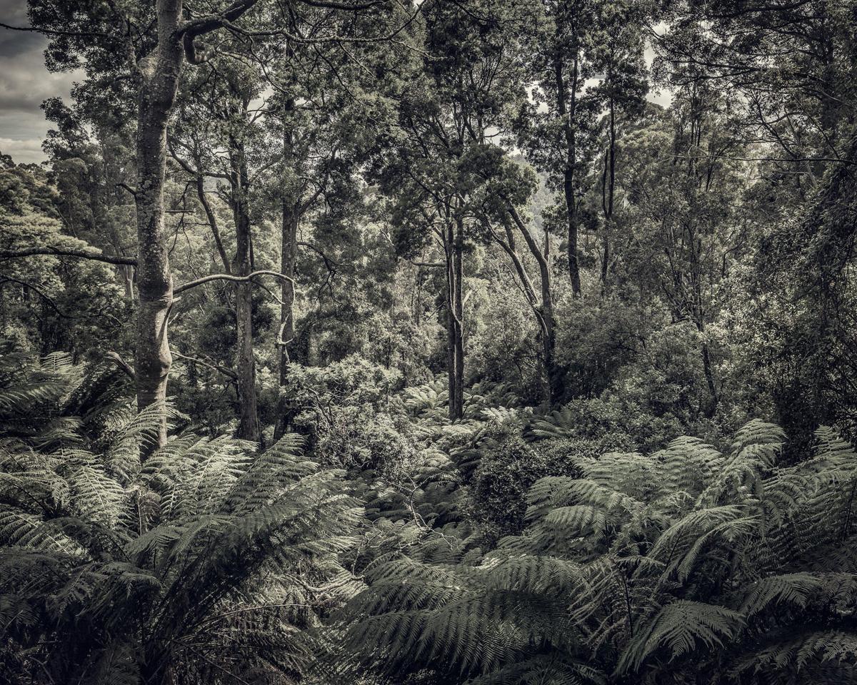 Fern Forest 2