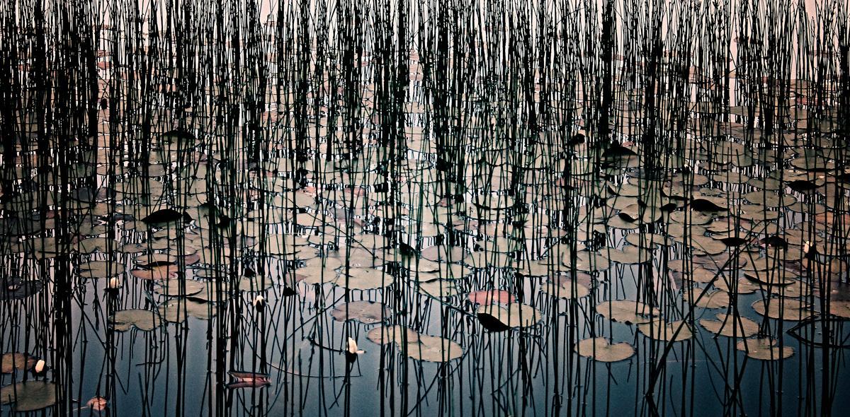Lillies, 2004