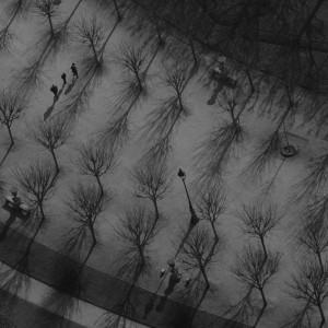 Ariel Trees