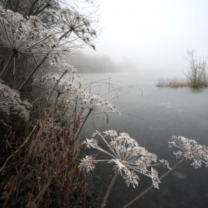 Frosty Lake 1