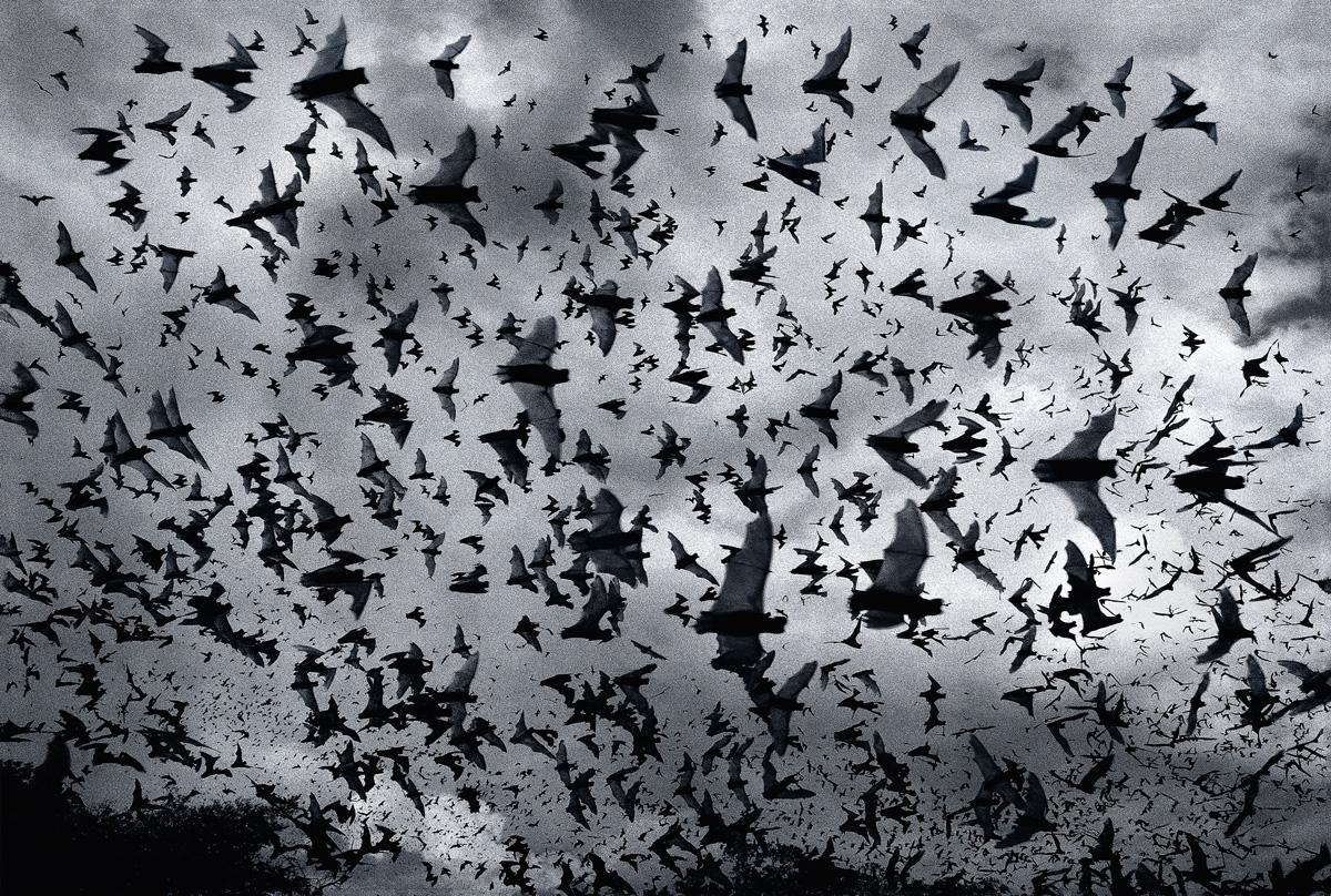 Bat Bomb