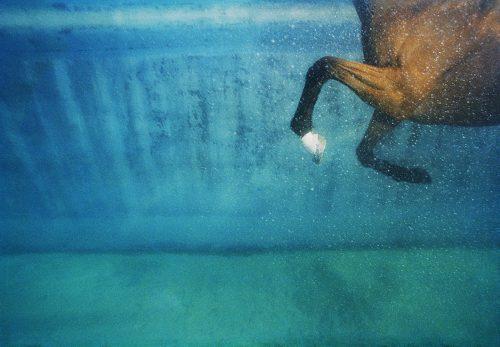Equus on Blue