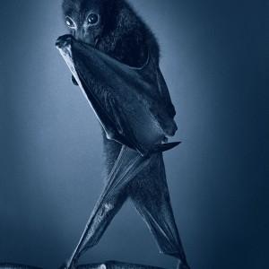 Opera Bat