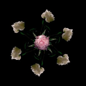 Floriculture C6