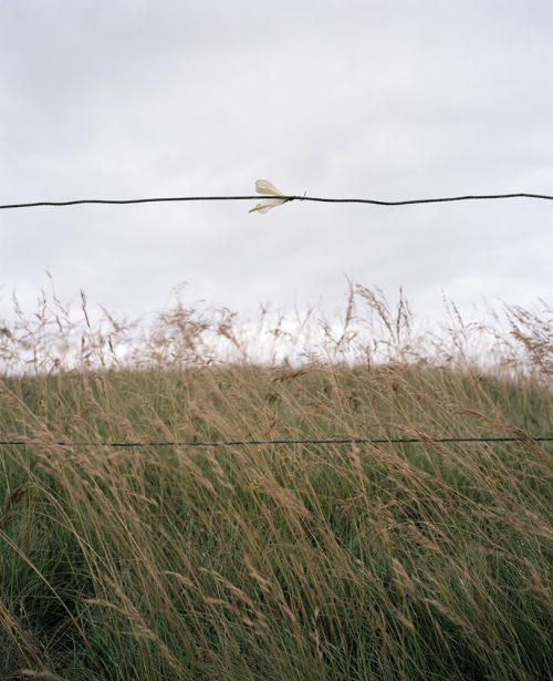 'In Memory of - 2' from the series Beachy Head