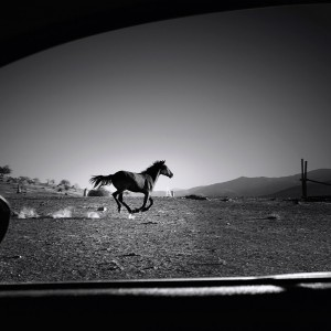 Horse, Chile, 2014