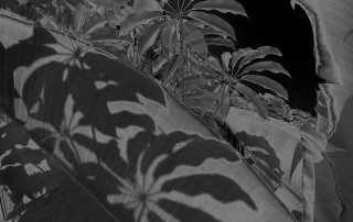 Karine Laval, Black Palms #08